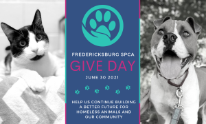 GIVE DAY FB cover v2