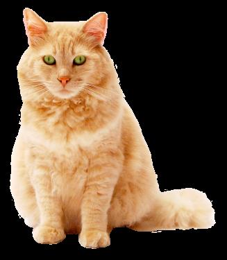 adorable-animal-animal-photography-cat-615369