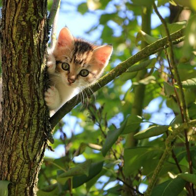 low-angle-view-of-cat-on-tree-257532