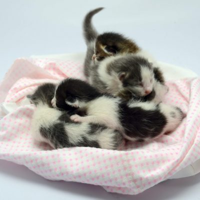 white-and-black-kittens-lying-on-pink-and-white-textile-3907099